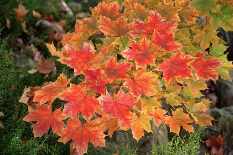 Fall Colors in Grand Rapids