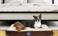 8 Best Dog Beds of 2018 for a 12 Hour (Or More!) Full ...