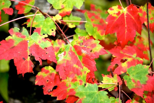 New England Foliage at Borderland State Park in MA
