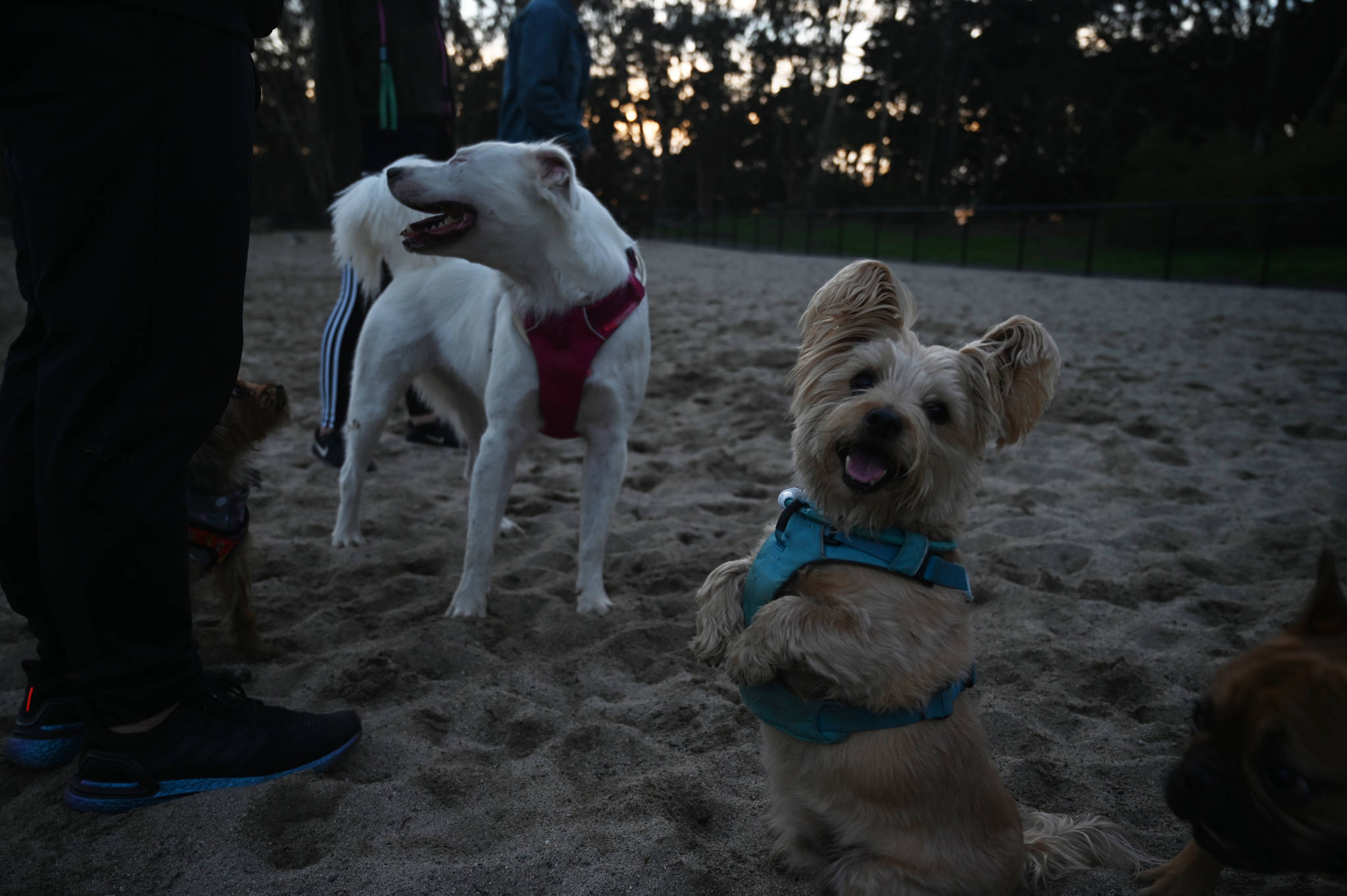 The renovated Golden Gate Dog Training Area includes separate spaces for large and small dogs. (Samantha Laurey/Special to SF Examiner)