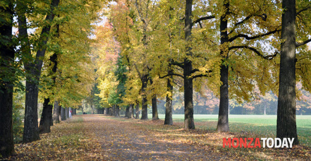 Passeggiata alla scoperta degli alberi di Monza 17