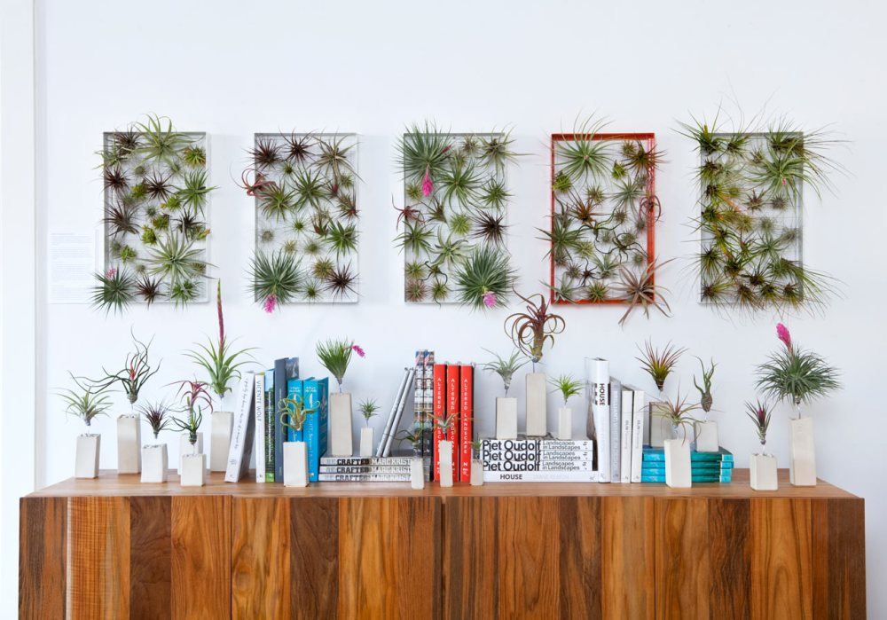 home-decor-ideas-plants-airplant-man
