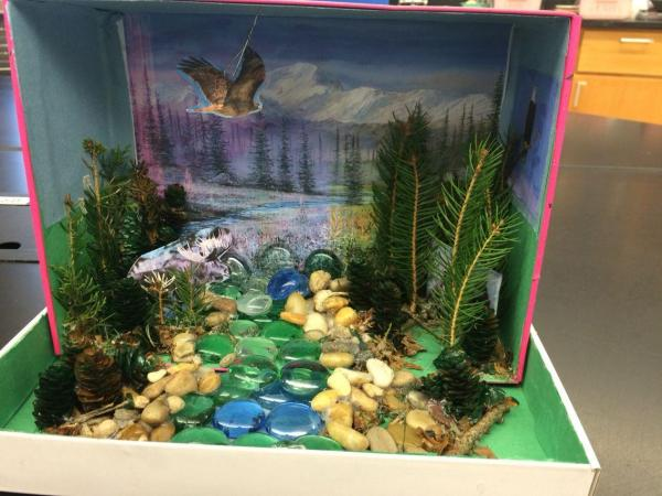 20+ Ecosystem Diorama Pictures and Ideas on STEM Education