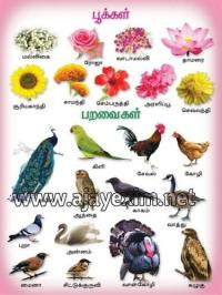 Flowers & Birds In Tamil Chart at Rs 750 /carton