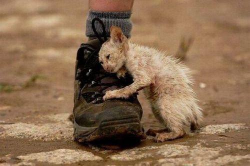 Há sempre alguém precisando de outro alguém por ai.