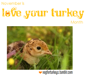 "November is Love Your Turkey Month! How will you show your love for these amazing birds?VegForTurkeys supports awareness and promotion of turkeys as a species, as opposed to a meal option. Sharing information about their social and emotional lives, cognition, and conditions living on turkey farms are our goals.How can you help? You can start by spreading the word.Share scientific articles about turkey's social habits, emotional needs, and amazing cognitive abilities.Spread the word that ""free-range"" and ""organic"" farm conditions are still inhumane and torturous. Many don't know that baby turkeys' beaks are surgically altered, that most turkeys don't live past 4 months of age, and that many birds are stunted mentally and emotionally due to overcrowding. The anxiety and fright that these birds endure is extremely cruel and certainly unnecessary. We can prevent it.Write your thoughts about what you can do, or what you are doing, to improve living conditions for turkeys and to help save more turkey (and other animal) lives.Recommend great books on factory farming and animal rights.Post away here!Thank you for your love of the turkeys."