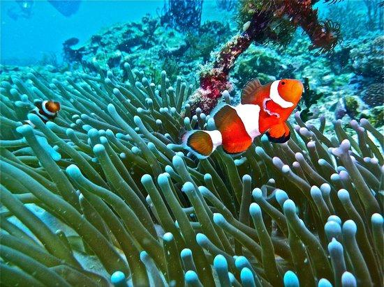 asia-filipinas-buceo-malapascua-filipinas-asia-boracay-white-beach-viajes-de-aventura-viajes-alternativos-turismo-responsable-viajes-en-grupo-viajar-en-grupo-viajar-sola-viajar-solo
