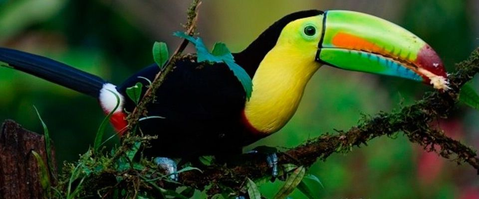 Cost Rica, Tucan: Viajes de Aventura, Viajes Alternativos, Turismo Responsable, Mochilero, Viajar en Grupo, Viajar Sola. 3000KM