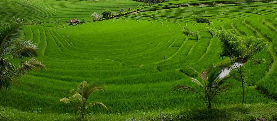 Arrozales, Indonesia, Asia: Viajes de Aventura, Viajes Alternativos, Turismo Responsable, Mochilero, Viajar en Grupo, Viajar Sola. 3000KM