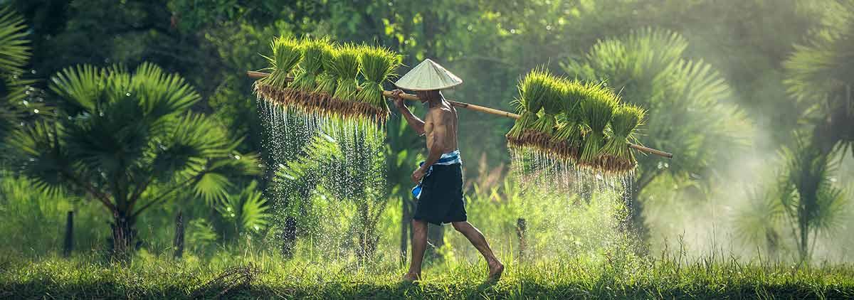 Vietnam, Asia - Viajes de Aventura y Viajes Alternativos en Grupo, Viajar Solo, Viaje Mochilero. - 3000KM - Slider