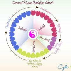 Menstrual Cycle Diagram With Ovulation Dc Circuit Breaker Wiring Chart Harmony Cervical Mucus Accurate And Timely