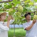 【40歳までOK。2018/3/30〆切】関東で1週間の農業体験ができる。栃木市・農業インターンシップ事業