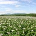 【2018/9/23~25開催】有休1日とれば参加可能! 函館近郊の農家で仕事を体験できる「北海道農業お試しツアー in厚沢部町」