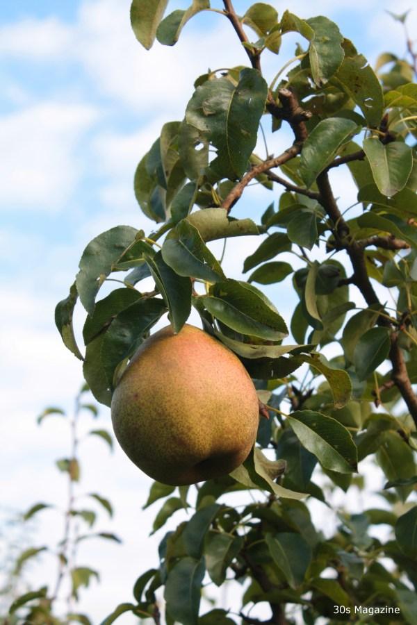 pear against blue sky