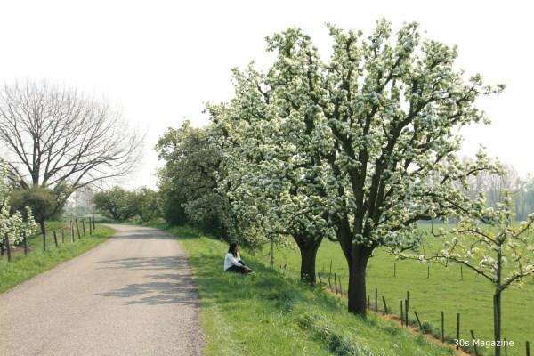 blossomtour2