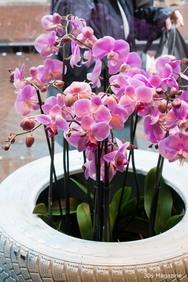 8 Tips how to take care of Orchids