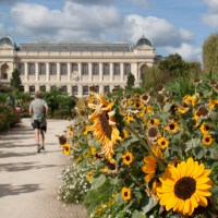 A Stroll in Jardin des Plantes in Paris