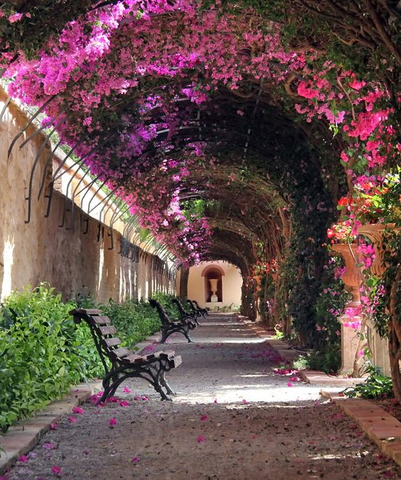 Valencia's best kept secret: Jardin de Monforte