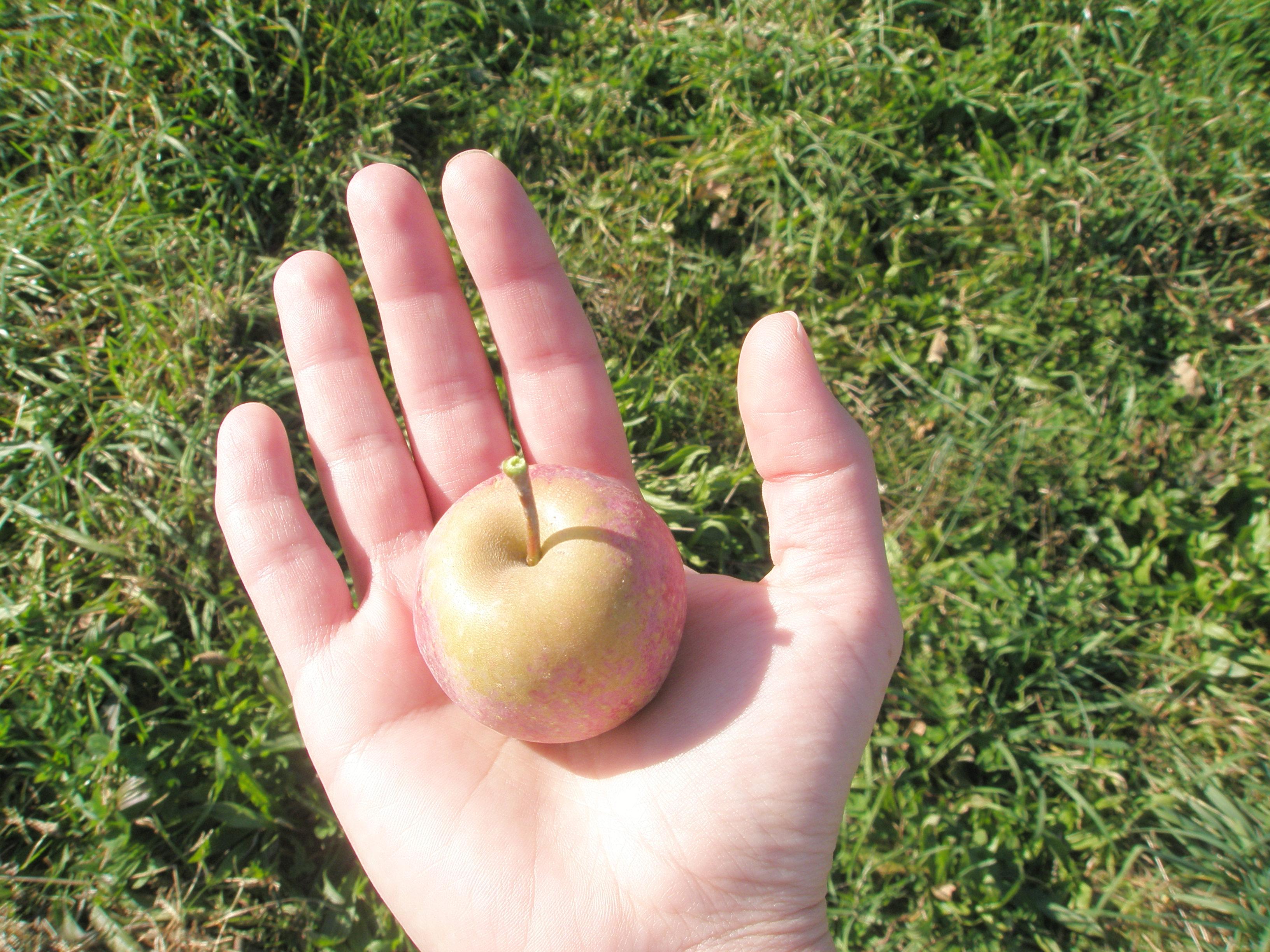 My apple is so mini...