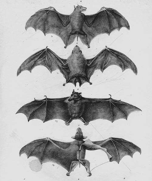 drawing art bat draw link bats