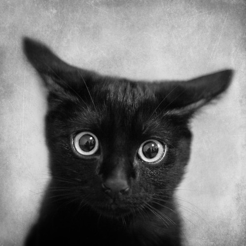 I just read The Dead Game<br /> and I was frightened.<br /> Vampires, wolves, and human vampires!<br /> I think I'm going to hide under the bed.<br /> The Dead are coming! The Dead are coming!<br /> Meow!