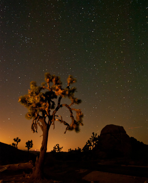 Long exposure of a Joshua tree, in Joshua Tree National Park. Photo: Sarah Chah (www.sharetheexperience.org)