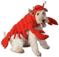 lobster costume | Tumblr