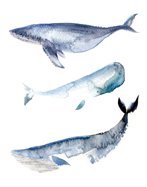 How Much Do Blue Whales Ejaculate : whales, ejaculate, Watercolour, Whales, Whale, Humpback, Sperm, Lucyeldridgeillustration
