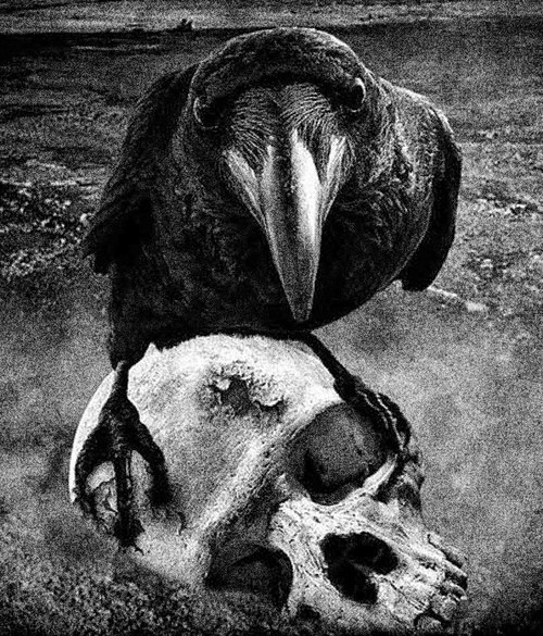Welcome all.<br /> Welcome to the land of The Dead.<br /> The Dead are my friends.<br /> They let me feast on their victims.<br /> It's not easy to be a bird of prey.<br /> THE DEAD GAME by Susanne Leist