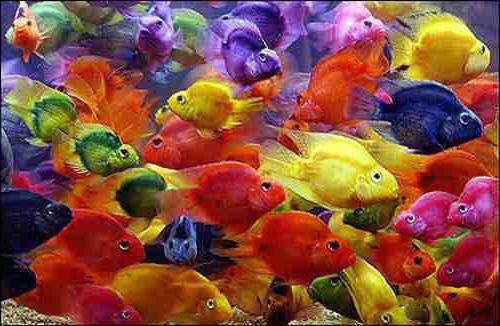 Parrot warna2
