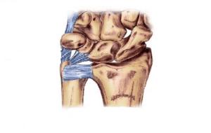 Triangular-Fibrocartilage-Complex