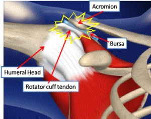 shoulder-anatomy-acromion