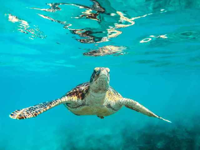 Travel to Barbados to escape the polar vortex.