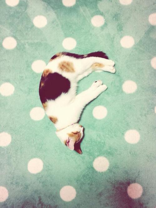 kitty on a polkadot background