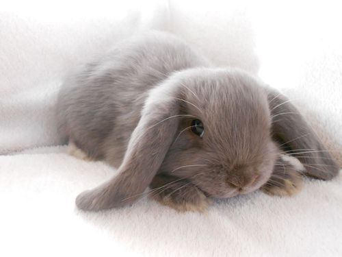 bunny rabbit baby animals