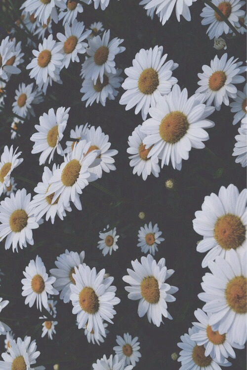 Cute Tumbler Christmass Wallpaper Cool Hipster Vintage Grunge Teen Flower Daisy Faded