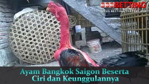 Ayam Bangkok Saigon Beserta Ciri dan Keunggulannya
