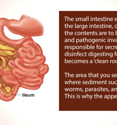 it prevents the backflow of harmful toxins and microbial overgrowth into the small intestine it also prevents food from entering the large intestine before  [ 1538 x 742 Pixel ]