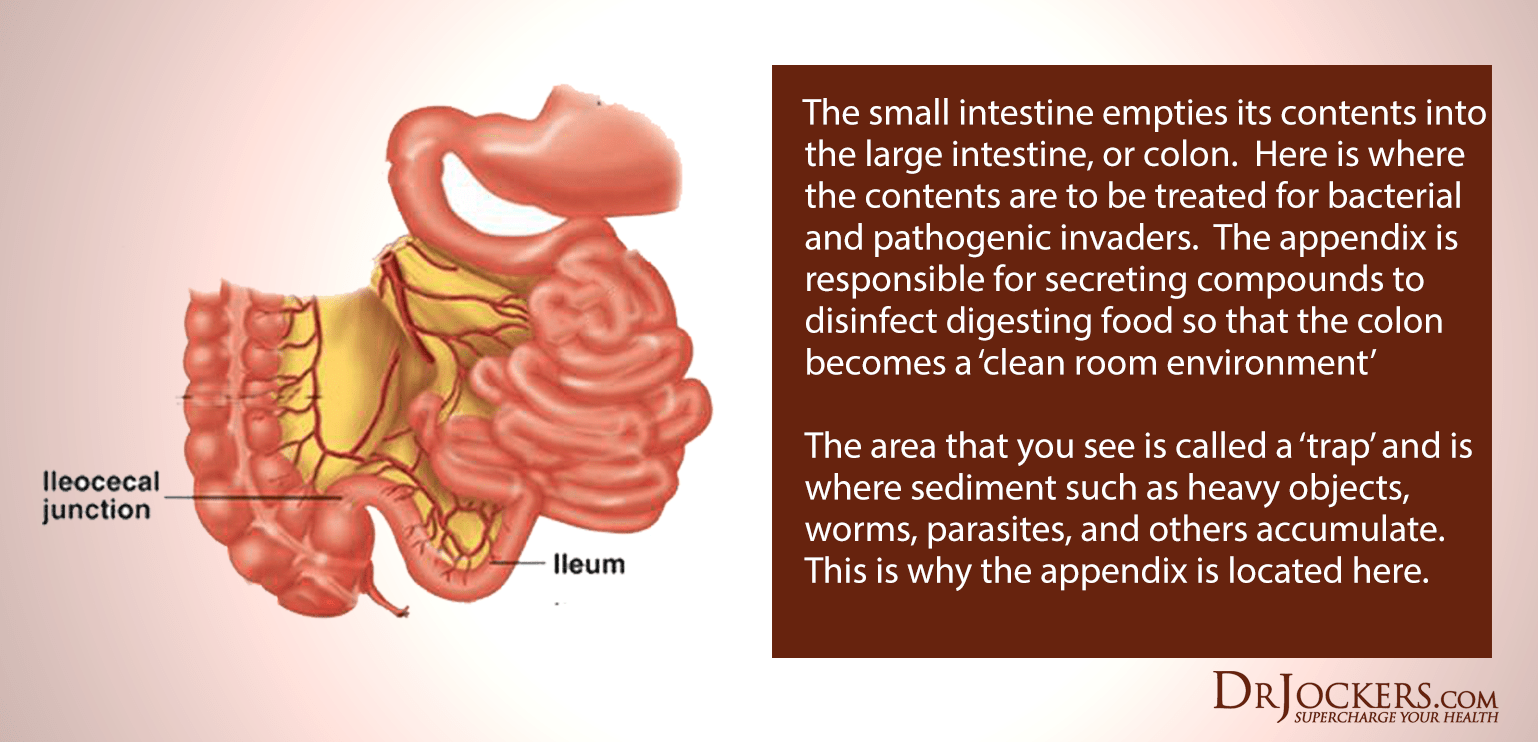 hight resolution of it prevents the backflow of harmful toxins and microbial overgrowth into the small intestine it also prevents food from entering the large intestine before