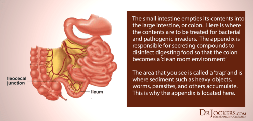 small resolution of it prevents the backflow of harmful toxins and microbial overgrowth into the small intestine it also prevents food from entering the large intestine before