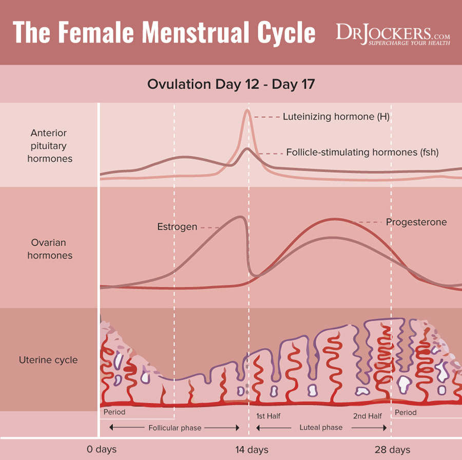 hight resolution of  end of the cycle consists of a sharp drop in both estrogen and progesterone this signals the shedding of the built up uterine lining through menses