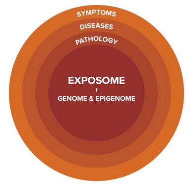 exposome + genome copy