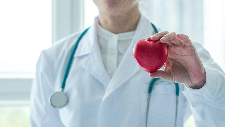 medico segurando um objeto vermelho com formato de coração