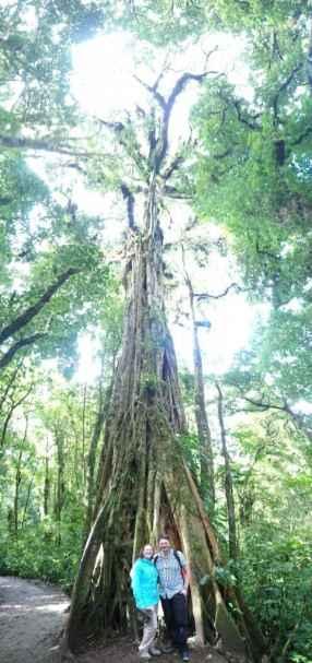 Huge Monteverde tree