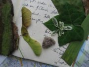 Leaves and stones from Clara's Grave