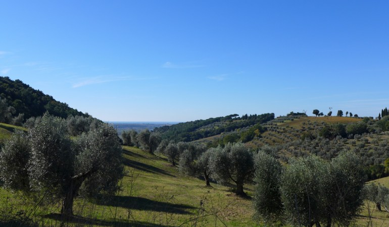 A Taste of Tuscan WWOOFing