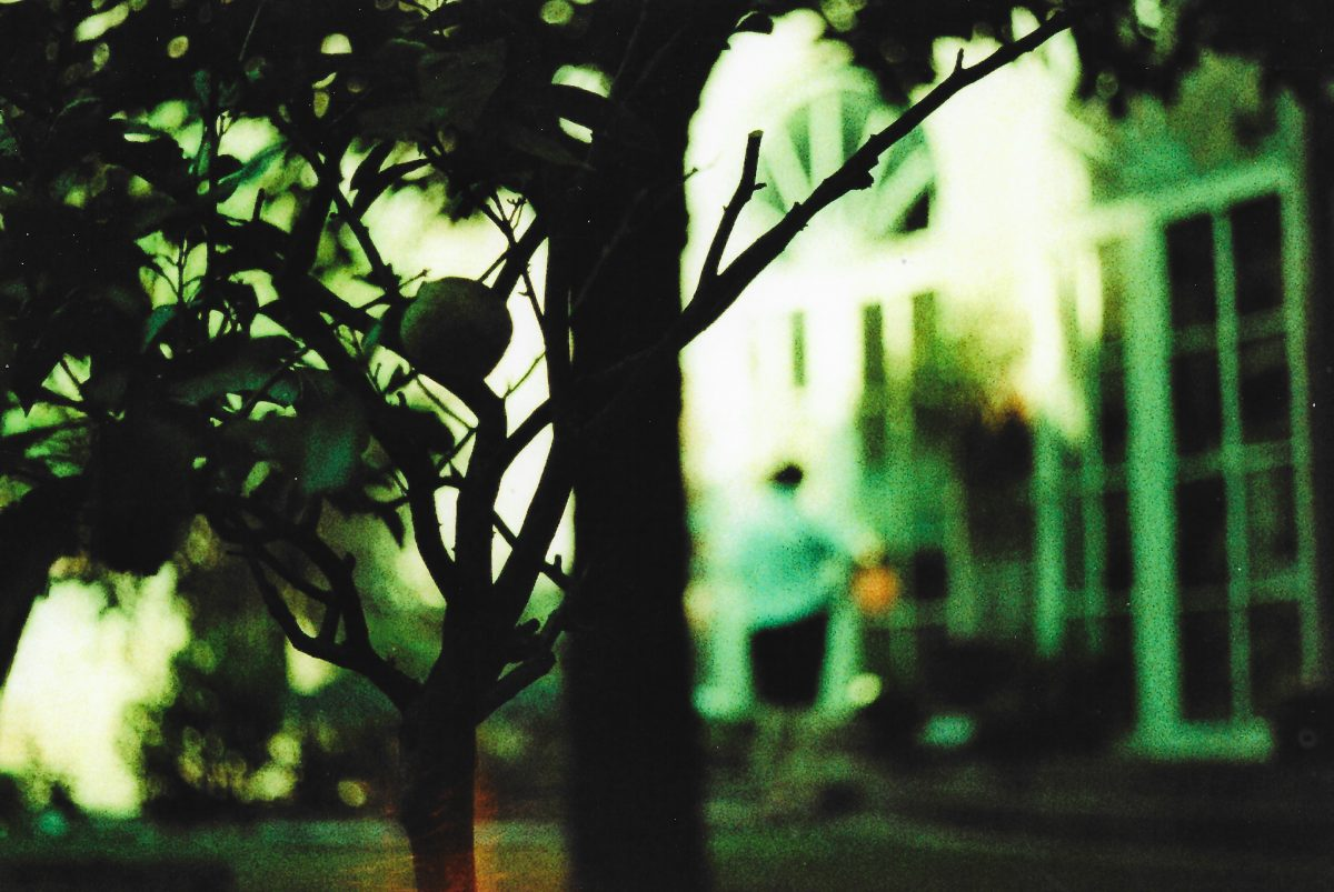 35mm Color Implosion Italian Summertime Sadness - Lemon Tree