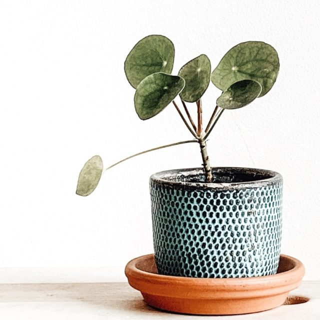Looking to bring more good vibes into your WFH setup?  Plants are believed to play an important role in enhancing a room's Feng Shui: place a Money Plant diagonally opposite your door (this spot is considered a pulse point for wealth) or go for a Peace Lily directly on your desk to soak in electromagnetic stress.  For more tips on how to Feng Shui your home office, head to the link in our bio. ☝️