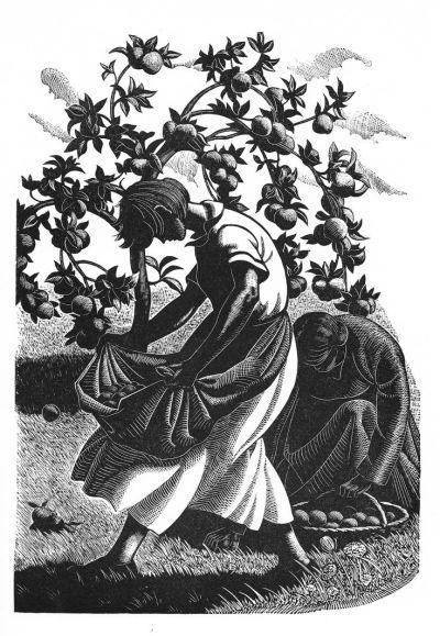 Four Hedges – Clare Leighton
