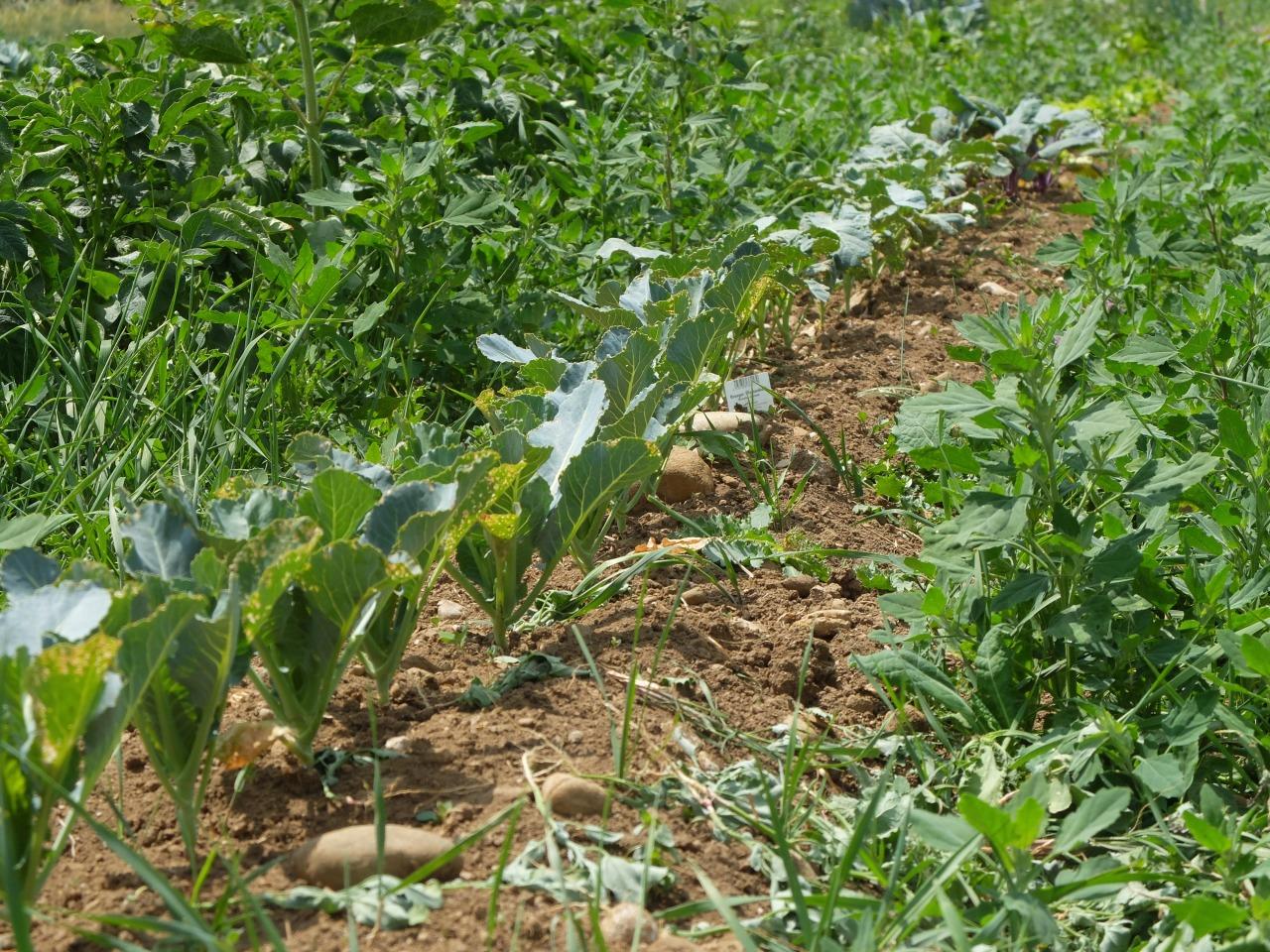 mangia minga - Unser Land Sonnenacker: rent a vegetable garden